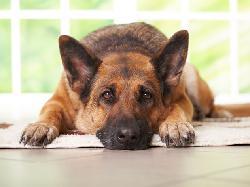 Thức ăn cấm kỵ với loài chó